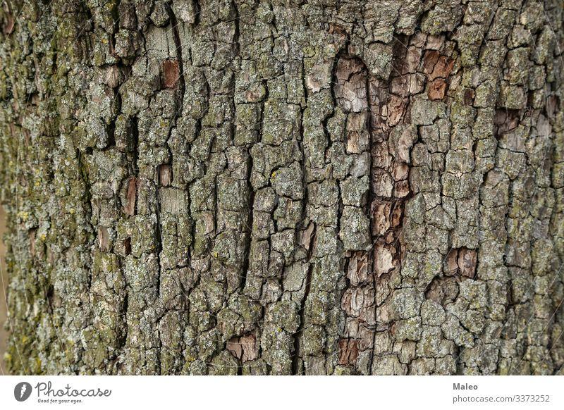 Birnenrinde Hintergrundbild Baumrinde Natur Holz braun grün Muster Nahaufnahme natürlich Pflanze abstrakt Wald alt Außenaufnahme Oberfläche Strukturen & Formen