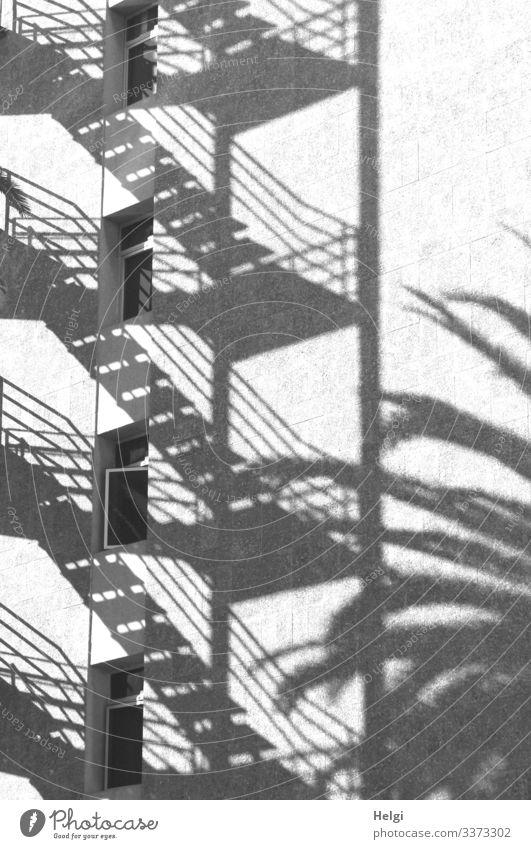 Schattenwurf einer Treppe und einer Palme an einer weißen Fassade mit Fenstern Baum Mauer Wand Treppengeländer außergewöhnlich eckig einzigartig grau schwarz