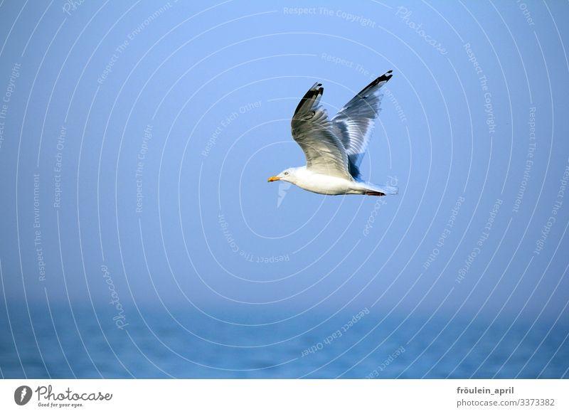 HAPPY BIRTHDAY PHOTOCASE zum 19.Geburtstag guten Flug!! Möwe Tier Vogel fliegen Himmel Freiheit blau Flügel weiß Sommer Feder Meer Natur frei