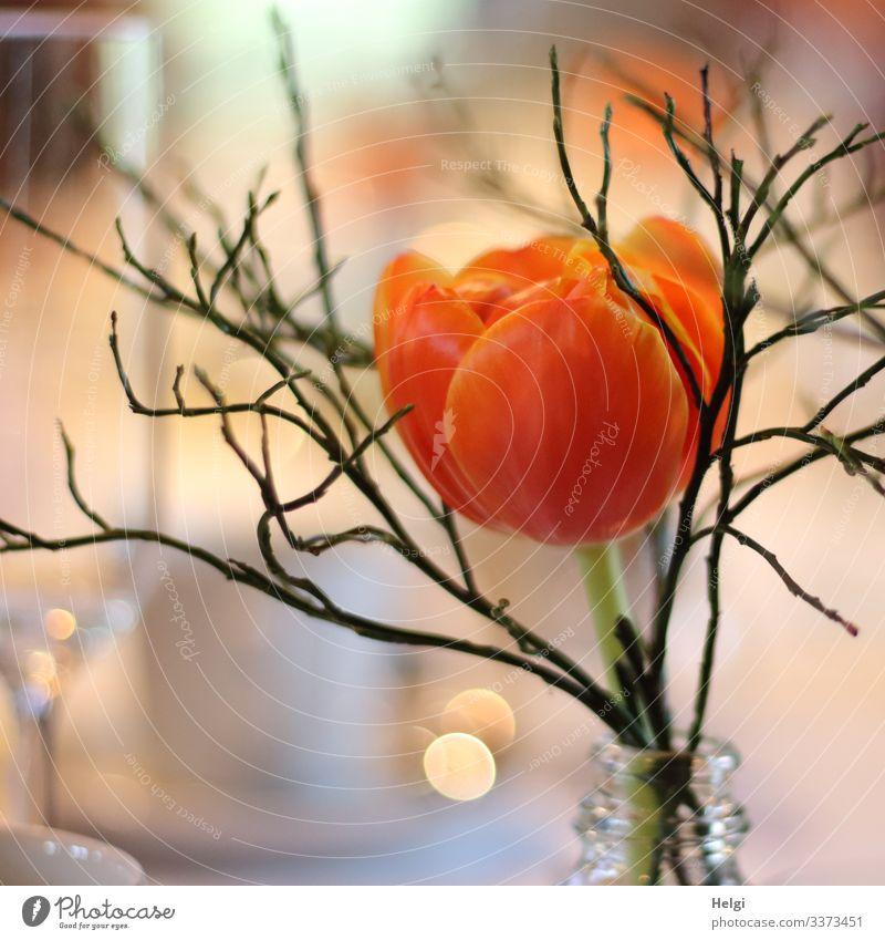 Tulpenblüte orange mit Zweig in einer Vase Feste & Feiern Blume Blüte Dekoration & Verzierung Tischdekoration glänzend stehen ästhetisch schön einzigartig gelb