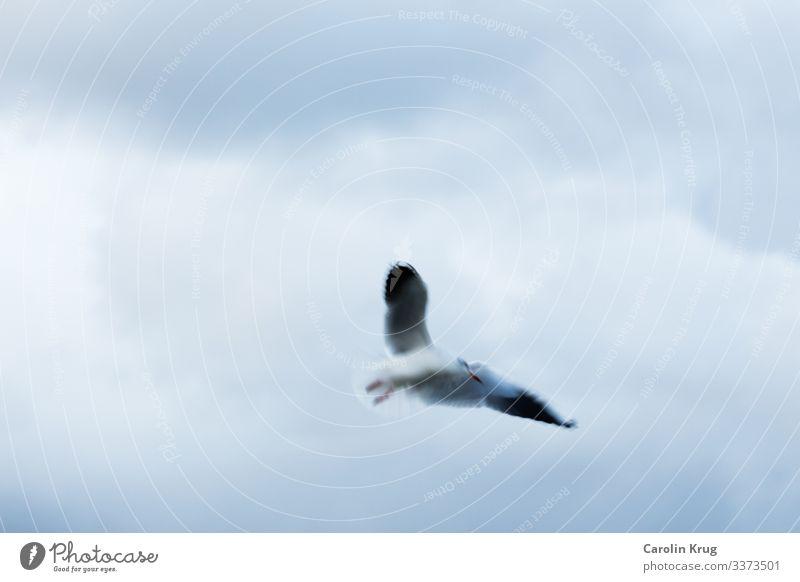 Die Möwe über dem Meer Luft Wind Sturm Küste Vogel Wasser fliegen träumen frei Unendlichkeit maritim retro wild blau grau silber Zufriedenheit Kraft