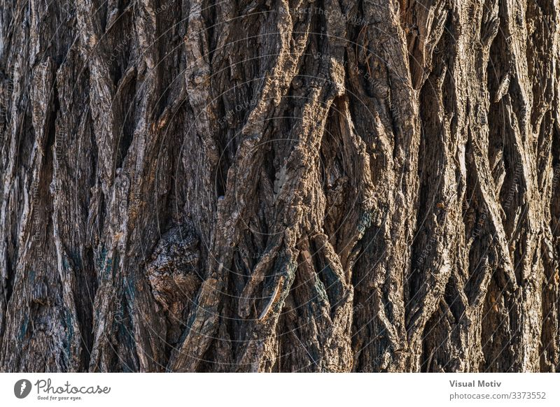 Rindentextur einer sibirischen Ulme Leben Garten Natur Pflanze Baum Park alt natürlich braun Farbe Sibirische Ulme Ulmus Pumila strukturierte Oberfläche