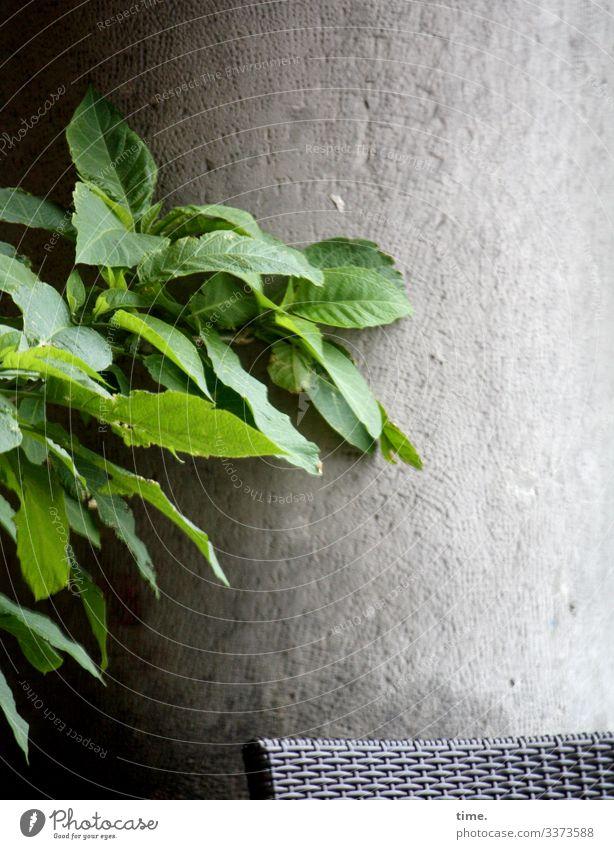Stilleplatz Balkon stuhl wand beton pflanze tageslicht sitzecke ausruhen lorbeer blatt pause rückzug stille schutz natur grün nackt flechtwerk leer