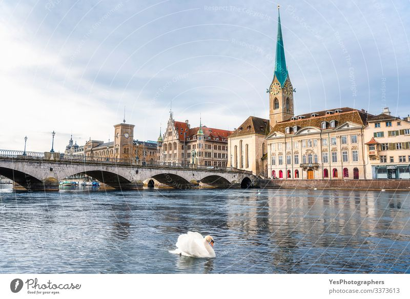 Zürcher Stadtbild mit einem Schwan an der Limmat in der Schweiz Ferien & Urlaub & Reisen Tourismus Sightseeing Städtereise Sommer Winter Kultur Landschaft