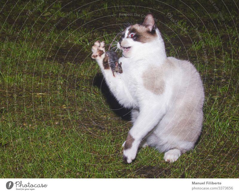 Runde 1 Kampfsport Erfolg Verlierer Tier Gras Katze Maus 2 Spielen Tauziehen Aggression bedrohlich Freundlichkeit Zusammensein groß klein lecker listig lustig