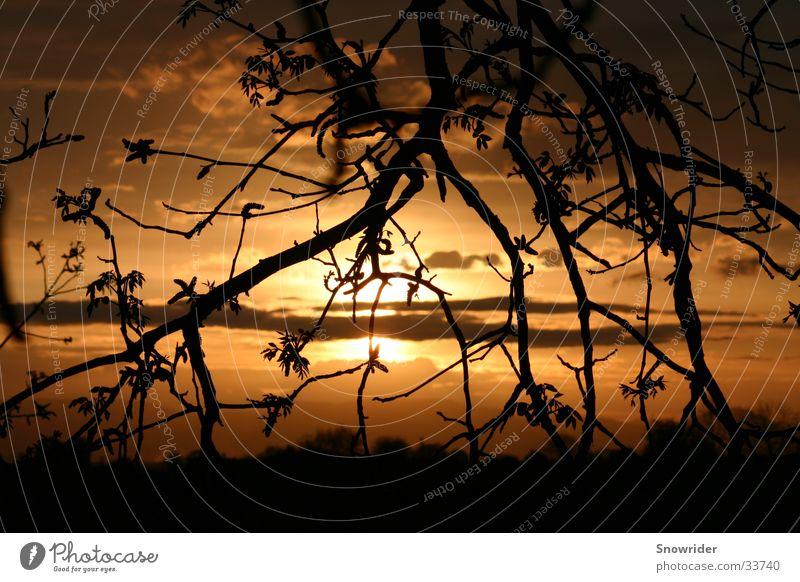 Red Sun Baum Sonnenuntergang Romantik Ast Tiefenschärfe