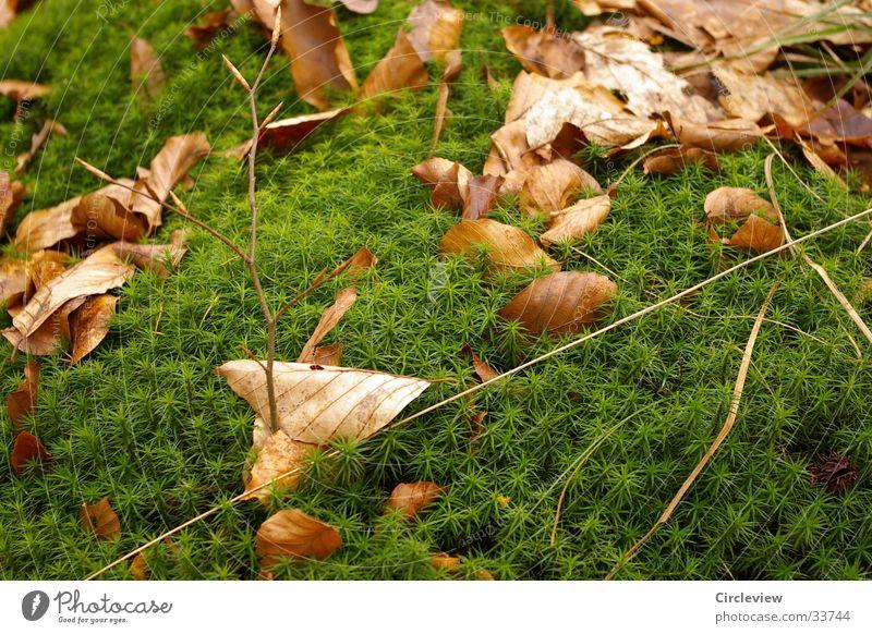 Idylle im Wald Natur grün Blatt braun Wachstum Moos getrocknet Trieb Laubbaum Reifezeit