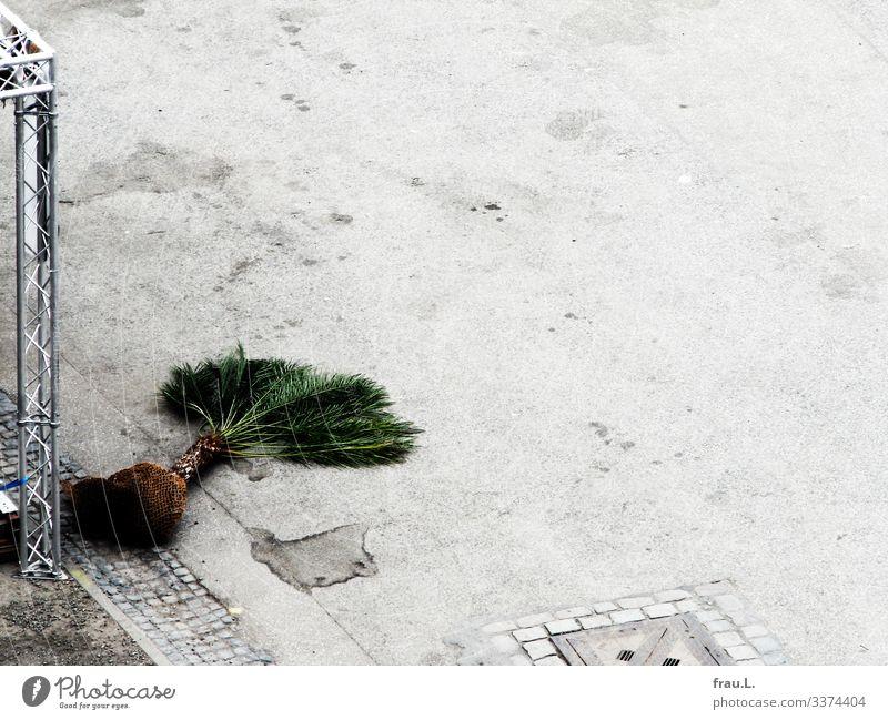 Palme Veranstaltung Pflanze Baum liegen außergewöhnlich Gerüst Platz Heiligengeistfeld Vorbereitung Party Farbfoto Außenaufnahme Textfreiraum rechts