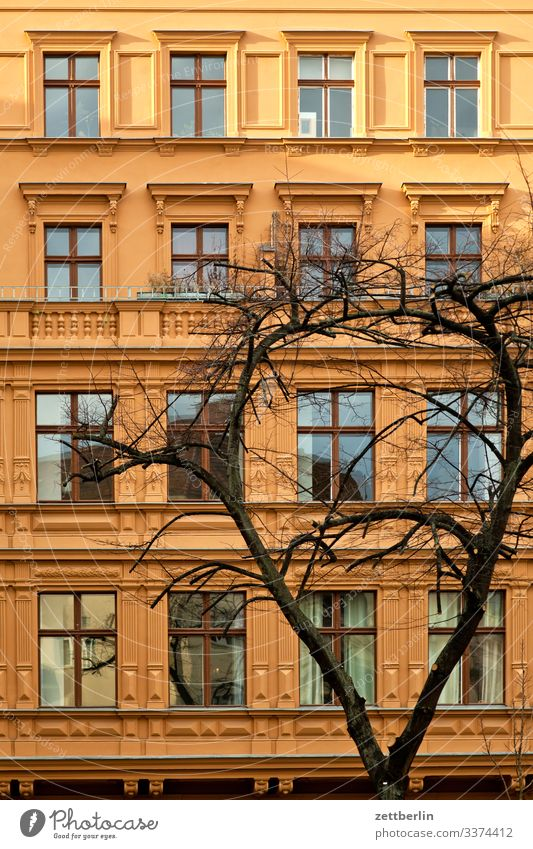Fassade mit Baum Architektur Klassizismus Jugendstilhaus Berlin Großstadt Hauptstadt Haus Hochhaus Wohnhaus Wohnhochhaus Häusliches Leben Wohngebiet Stadthaus