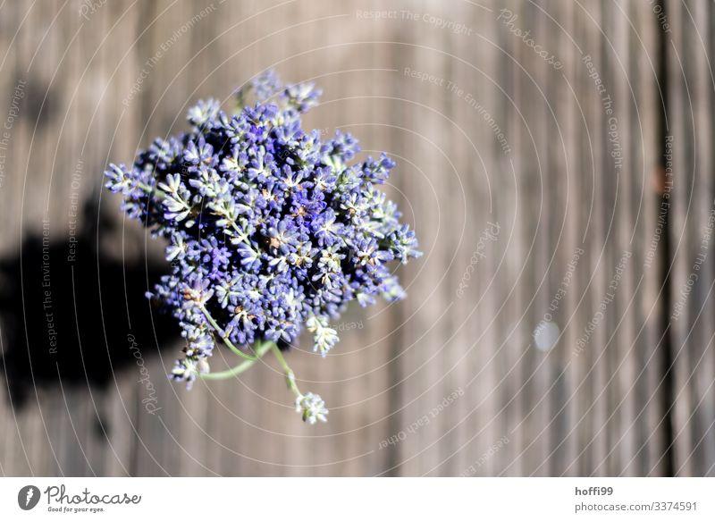 Lavendel als Strauß gebunden von oben gesehen Blüte Blume ästhetisch Duft authentisch frisch nah Wärme violett Frühlingsgefühle Erwartung Farbe Freude