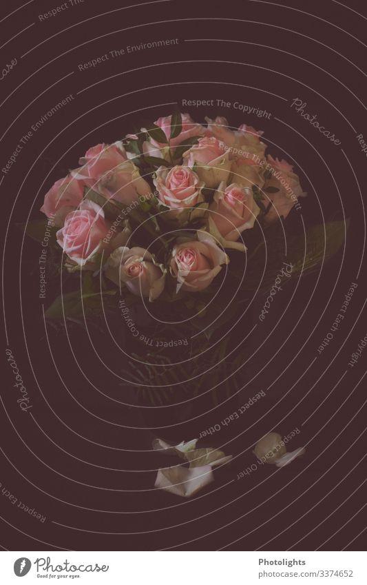 Rosenstrauß Erholung ruhig Duft Dekoration & Verzierung Natur Pflanze Blume Blatt Blüte Blühend fallen leuchten verblüht ästhetisch schön grau grün rosa schwarz