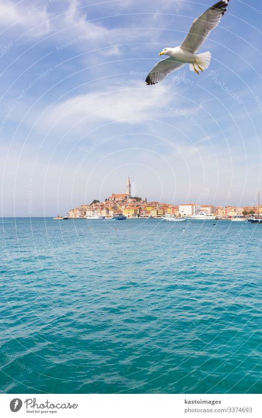 Panoramablick auf die Altstadt von Rovinj, Kroatien. Ferien & Urlaub & Reisen Tourismus Sommer Meer Himmel Wolken Küste Stadt Kirche Hafen Architektur Segelboot
