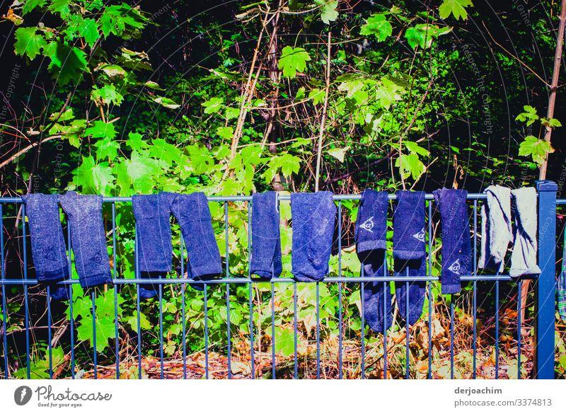 """Waschtag in """" Franken """" Auf einem Zaun aufgehängt verschiedene blaue  Hosen zum Trocknen. Im Hintergrund Grüne Blätter. Design Gesundheitswesen Umwelt Sommer"""