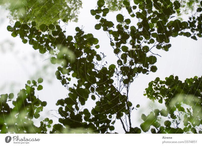 Es gibt so trübe Tage... Teich dunkel Blatt Seeufer Wasser Traurigkeit Wasseroberfläche Reflexion & Spiegelung ruhig Natur Wasserspiegelung Schatten Erlen Baum