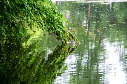 das Land hängt in den See Tag Menschenleer Außenaufnahme Farbfoto nachdenklich Einsamkeit Sehnsucht ruhig grün Baum see teich Wasser Reflexion & Spiegelung