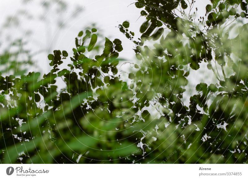 Blick in einen Baum umstandenen Weiher Reflexion & Spiegelung Kontrast Schatten Tag Menschenleer Gedeckte Farben Farbfoto Traurigkeit träumen Natur weiß grün