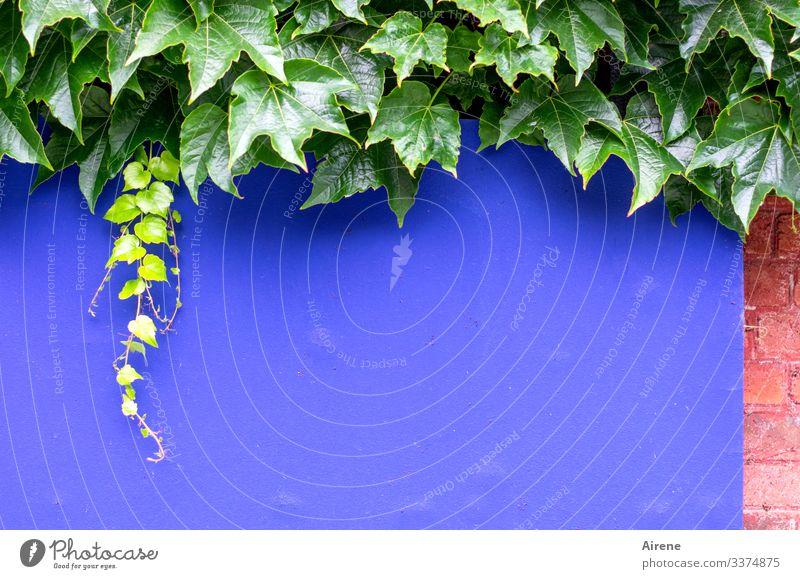 kräftige Farben für kraftvolle Ankündigungen positiv frisch Detailaufnahme farbig farbiger Hintergrund bunt gemischt Platz für Text leer Natur Blatt Vegetation