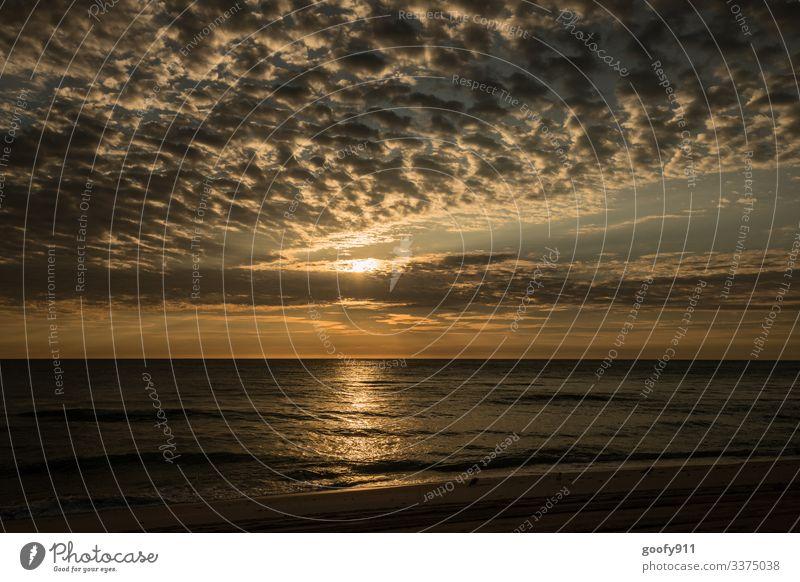 Sundowner Florida Sonnenuntergang Sonnenlicht Ferien & Urlaub & Reisen Fernweh Strand Sand Wolken Außenaufnahme Farbfoto Meer Ozean Küste Wellen Freiheit Ferne