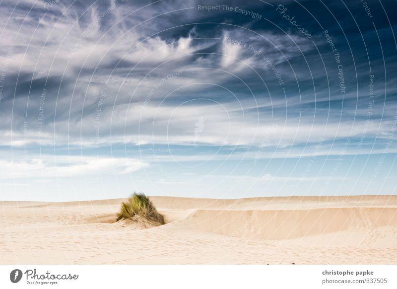 Wie Sand am Meer Himmel Ferien & Urlaub & Reisen Sommer Landschaft Wolken Strand Sand Schönes Wetter Wüste heiß Unwetter Stranddüne Grasbüschel Landschaftgemälde