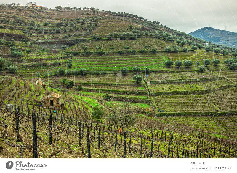 Grüne Hügellandschaft in der Region des Dourotals Portugal obere Ansicht abstrakt Ackerbau schön Land Landschaft Bodenbearbeitung Douro-Tal duero Umwelt Europa