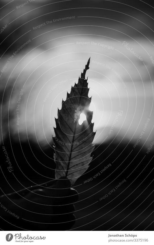 Blatt mit Loch im Gegenlicht minimalistisch schwarz Abstrakter schwarzer Hintergrund Herbst Schwarze Textur Hand Minimales Schwarz Minimalismus