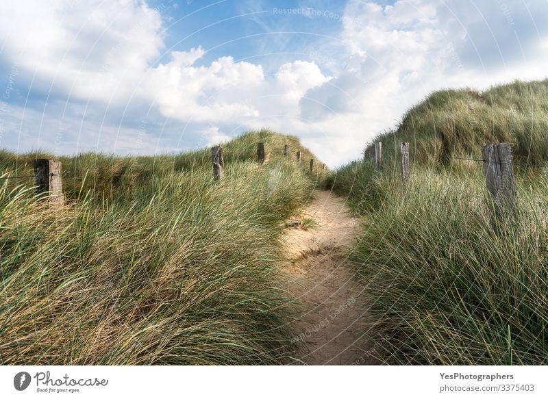 Allee durch hohes Gras auf einer Sanddüne auf Sylt Freiheit Sommer wandern Schönes Wetter Hügel Nordsee Wege & Pfade Optimismus Friesland Deutschland