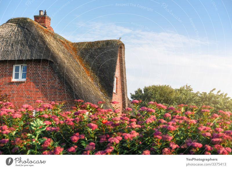 Reetdach eines skandinavischen Hauses mit Rosen auf der Insel Sylt Sommer Garten Natur Schönes Wetter Blume Nordsee Dorf Traumhaus Gebäude Architektur Fassade