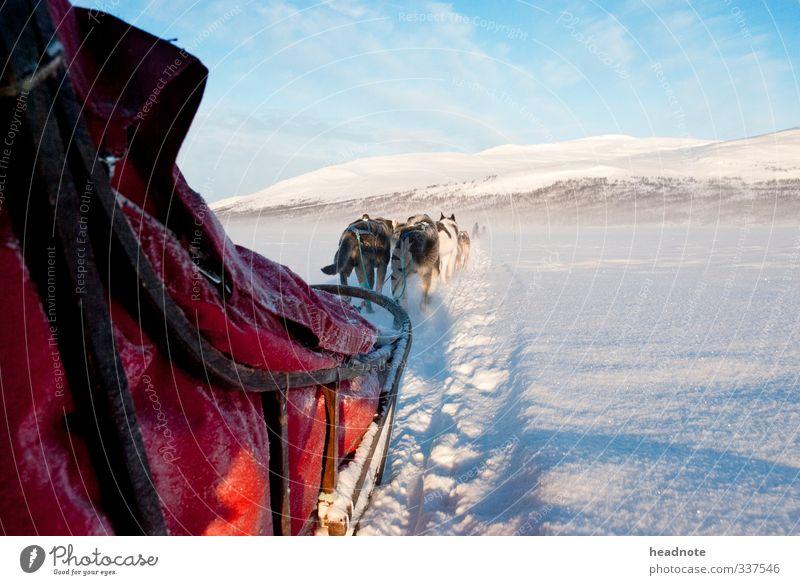 Mushers view Ferien & Urlaub & Reisen Tourismus Abenteuer Ferne Winter Schnee Natur Landschaft Sonnenlicht Schönes Wetter Eis Frost fahren genießen blau rot