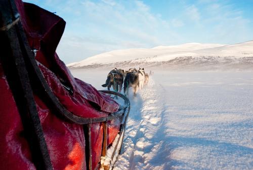 Mushers view Natur Ferien & Urlaub & Reisen blau weiß rot Landschaft Winter Ferne Schnee Eis Tourismus Schönes Wetter Abenteuer genießen Frost Lebensfreude