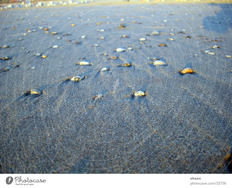 Muscheln Sandstrand Meer Strand Niederlande Wasser Natur Nordsee Nordzee