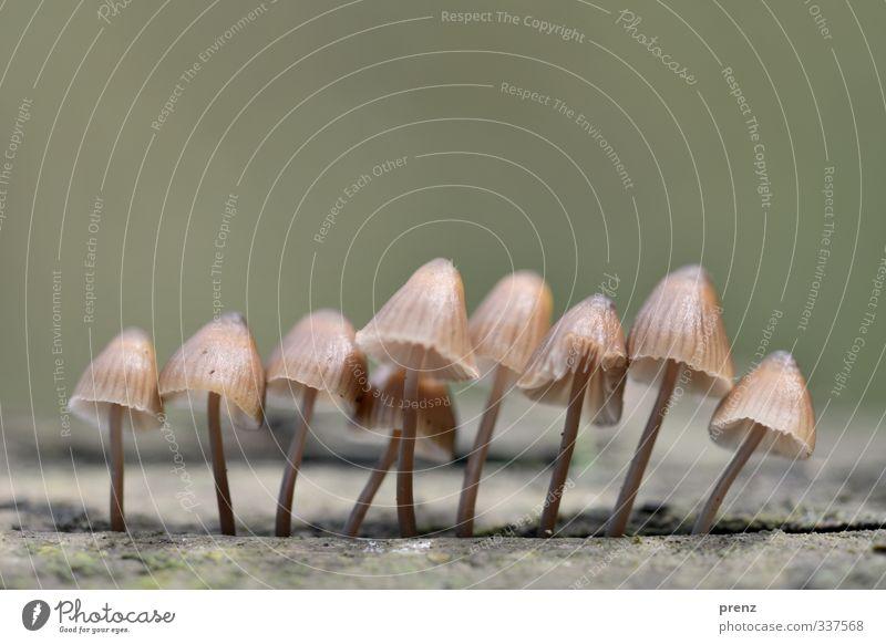 Linedance Natur grün Pflanze Umwelt Herbst grau Linie mehrere Pilz
