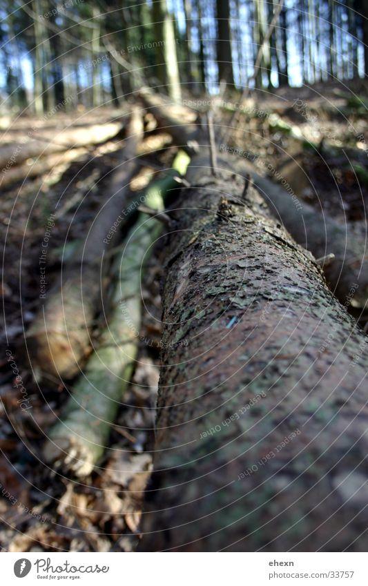 Longside!? Baum:) Blatt Wald Perspektive Ast Baumstamm