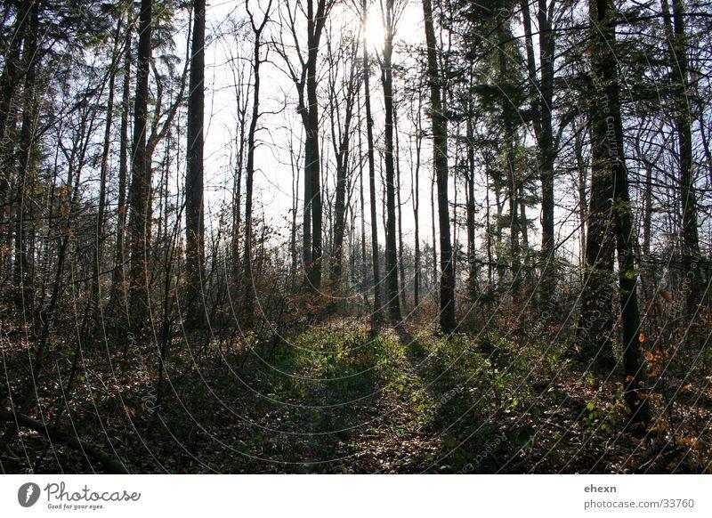 Lichtstreifen Baum Wald Aussicht Lichteinfall
