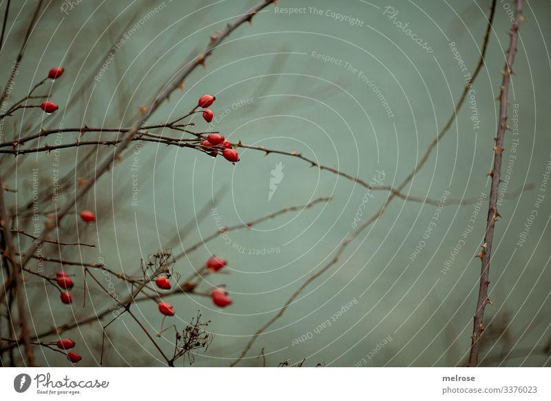rote Beeren, Natur, Melancholie Lifestyle Stil Winter schlechtes Wetter Pflanze Baum Blatt Zweige u. Äste Wald Regen trist hängen Traurigkeit dunkel kalt nass