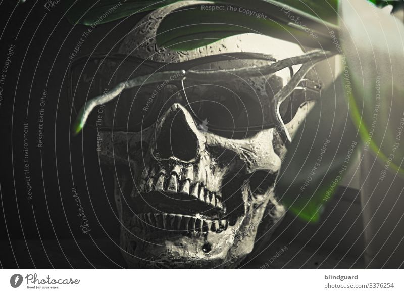Wir werden alle Sterben, aber nicht heute. Ein Virus und die Massenhysterie. virus tod schädel skelett totenschädel pirat sonnenbrille gruselig Tod Kopf