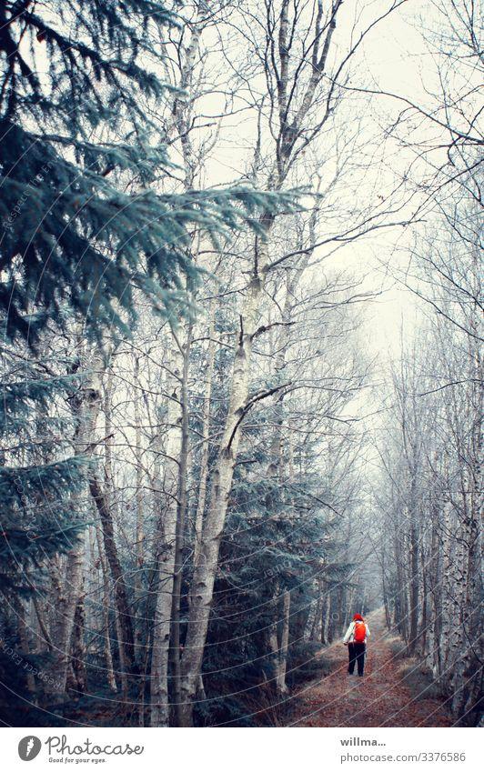Das alternde Rotkäppchen im kalten Birkenwalde Frau Wald aus Schneise kahl Nadelbäume Bewältigung rot Rucksack November vollschlank wandern Spaziergang Herbst