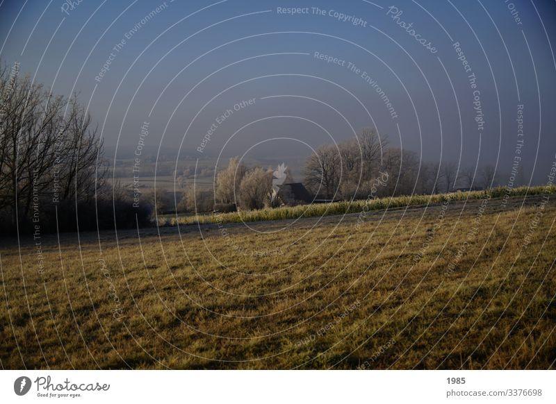Winterlandschaft Nebelschleier Nebelwand Landschaft Winterstimmung Außenaufnahme Menschenleer Natur Textfreiraum oben Farbfoto Tag Morgen kalt frieren Frost