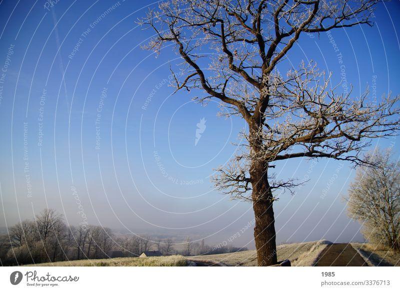 Baum im Winterfrost Winterlandschaft Wege & Pfade Frost Nebel Nebelschleier Menschenleer kalt Außenaufnahme Natur Wetter weiß Farbfoto Landschaft Feld Raureif