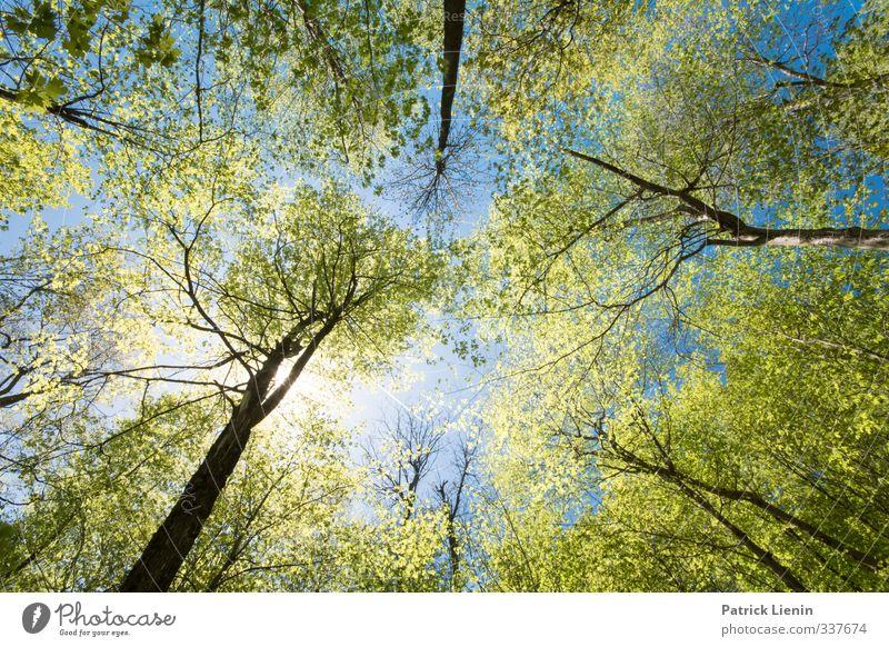Wicked Forest Wellness harmonisch Wohlgefühl Zufriedenheit Sinnesorgane Erholung ruhig Meditation Abenteuer Sommer Umwelt Natur Landschaft Urelemente Luft