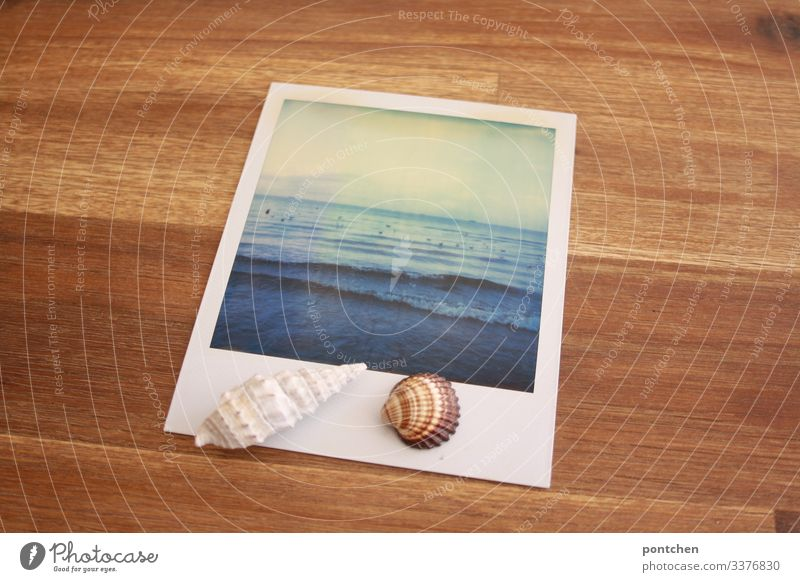 Muscheln liegen auf Polaroid das Meer zeigt. Bild im Bild Ferien & Urlaub & Reisen Tourismus Ferne Sommer Sommerurlaub Himmel Mittelmeer blau braun
