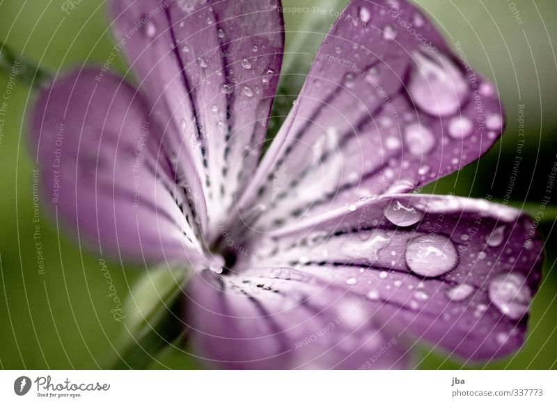 nasse Schönheit Natur grün Wasser Pflanze Sommer Blume Frühling Blüte Garten Regen frisch ästhetisch Wassertropfen Blühend violett