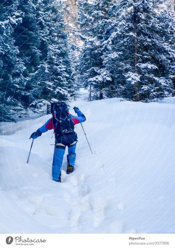 go outdoor Winter wandern Himmel Spaziergang Außenaufnahme Berge u. Gebirge Schnee Landschaft kalt weiß Baum Tanne Tannenzweig Wald Frost Farbfoto Natur