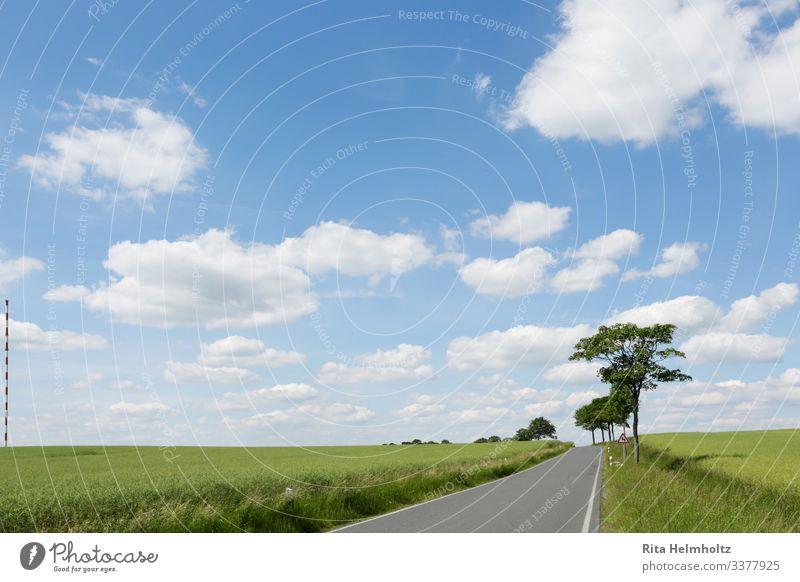 Strasse durch grüne Äcker Umwelt Natur Landschaft Pflanze Himmel Wolken Klima Schönes Wetter Baum Gras Nutzpflanze Feld Straße Wege & Pfade Fröhlichkeit frisch