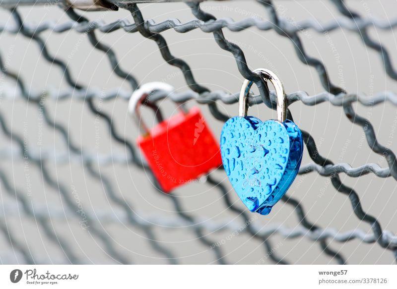 Liebesschlösser im Regen Schlösser Liebesschloss herzförmig Schloss Herz Farbfoto rot blau Verliebtheit Romantik Menschenleer Gefühle Nahaufnahme Außenaufnahme