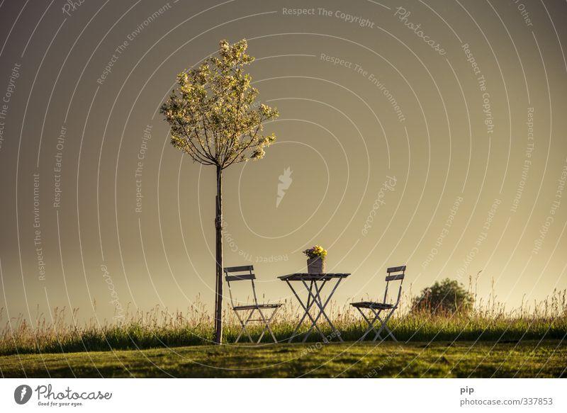 freisitz Natur Landschaft Sonnenaufgang Sonnenuntergang Sommer Schönes Wetter Pflanze Baum Gras Blüte Topfpflanze Apfelbaum Garten Park Wiese Feld Horizont