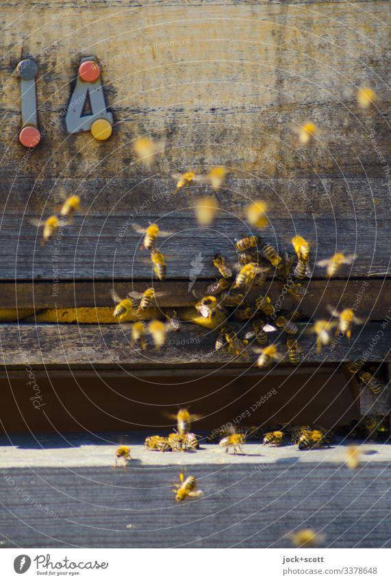 14 | abgehoben Imkerei Bienenstock Honigbiene Schwarm Holz fliegen authentisch klein viele Bewegung Leben Schwärmerei Sozialstruktur Schweben Schlitz Summen