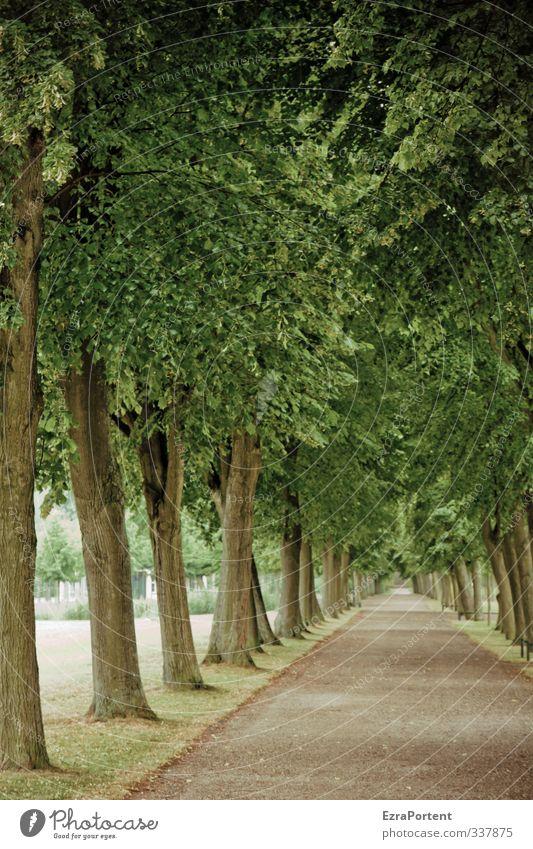 walk with me harmonisch Wohlgefühl Erholung ruhig Natur Landschaft Pflanze Frühling Herbst Baum Park Sand Holz schön braun grün Einsamkeit Spazierweg Blatt