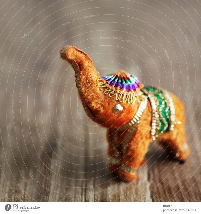 Bollywood goes Photocase Tier Holz orange gold Freizeit & Hobby Dekoration & Verzierung Dinge niedlich Fell Kitsch tierisch Indien Elefant Rüssel Elefantenohren