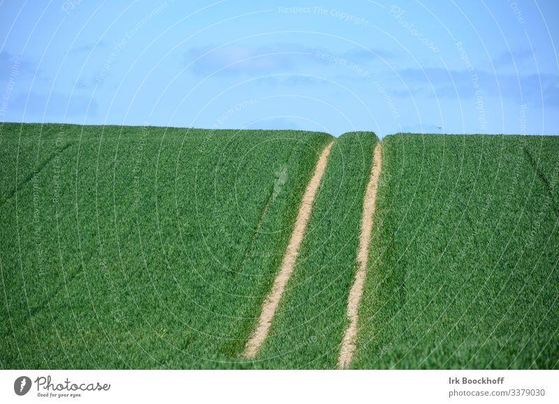 Spuren auf einem Feld Traktorspur Frühling Getreide Himmel Landwirtschaft grün Farbfoto Natur Pflanze Sommer Außenaufnahme Landschaft Wolken Ackerbau Horizont