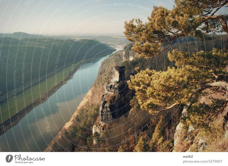 Fließend Umwelt Natur Landschaft Pflanze Wasser Wolkenloser Himmel Horizont Sommer Schönes Wetter Baum Elbsandsteingebirge Sächsische Schweiz Felsen Elbe